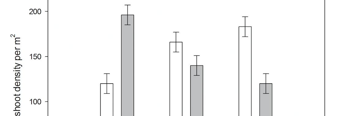 Natural seedling recruitment of Plantago lanceolata cv. 'Ceres Tonic' in an established sward