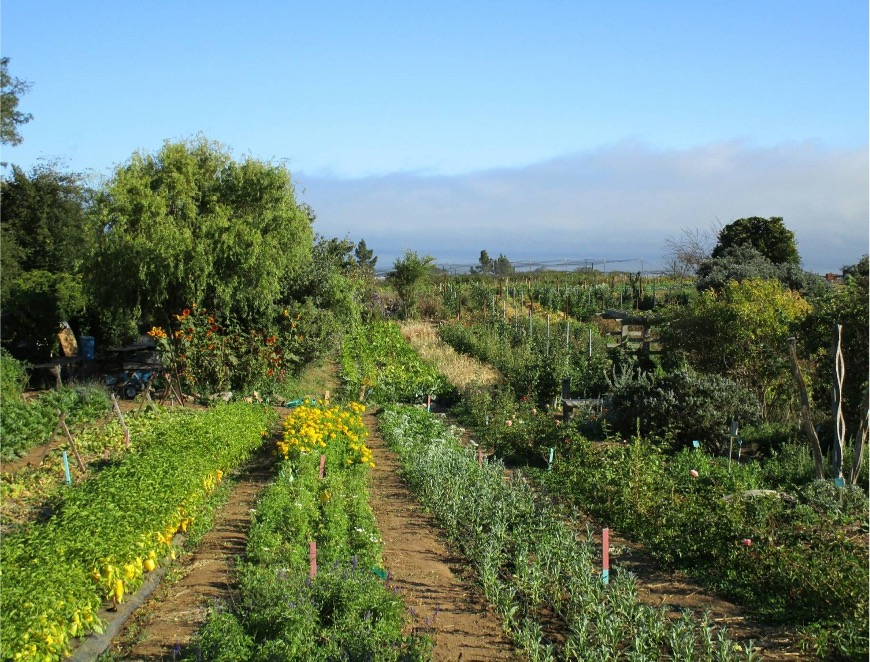 Assessing the agroecological status of a farm: a principle-based assessment tool for farmers